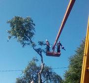 Спил дерева, услуги садовника, демонтаж работы, земляные работы в ручную Одеса